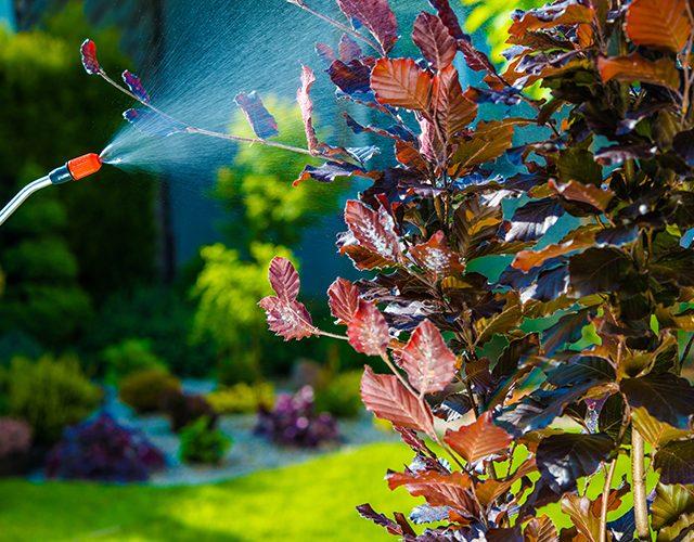 Backyard Garden Pest Control Spraying. Small Tree Spraying in the Garden.